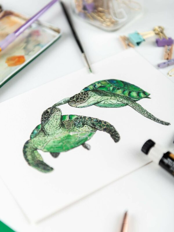 Art print - illustration of two turtles swimming touching flipper to nose