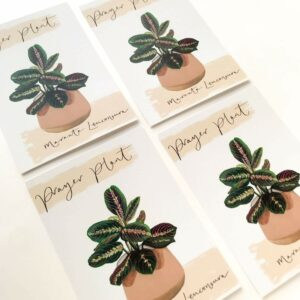 Illustrated house plant postcards with prayer plant design