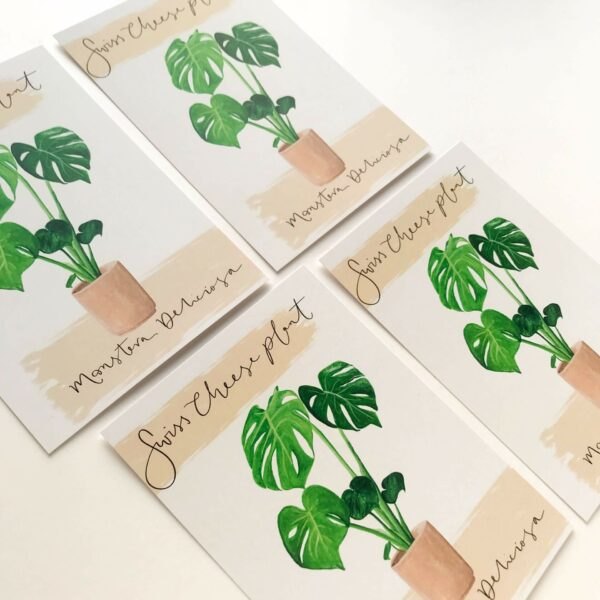 Illustrated house plant postcards with monstera design