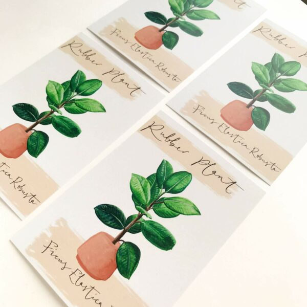 Illustrated house plant postcards with rubber plant design