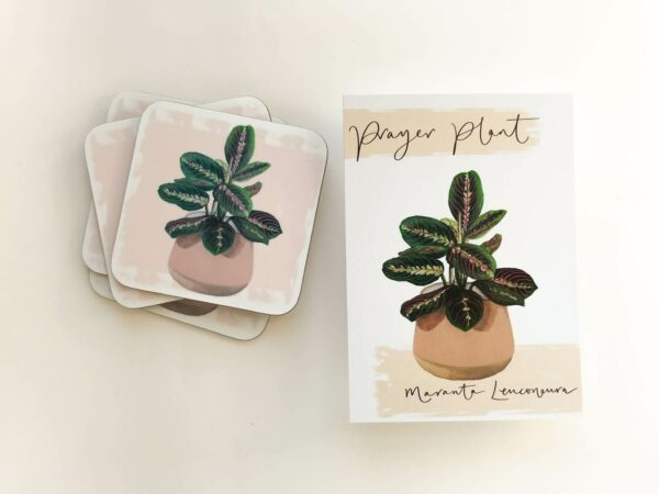Stack of house plant coasters with prayer plant illustration design and matching postcards